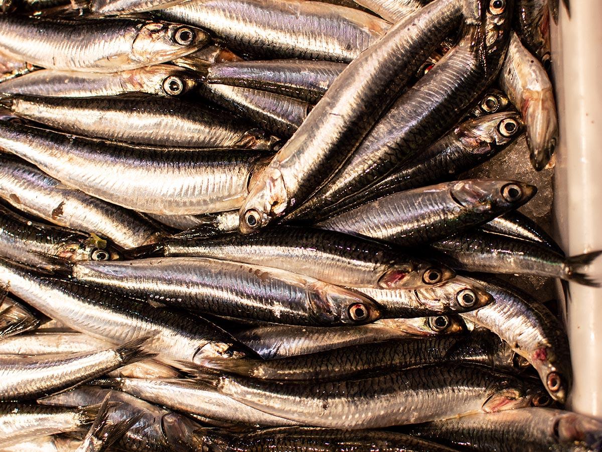 Peix fresc i marisc Toni Ortiz