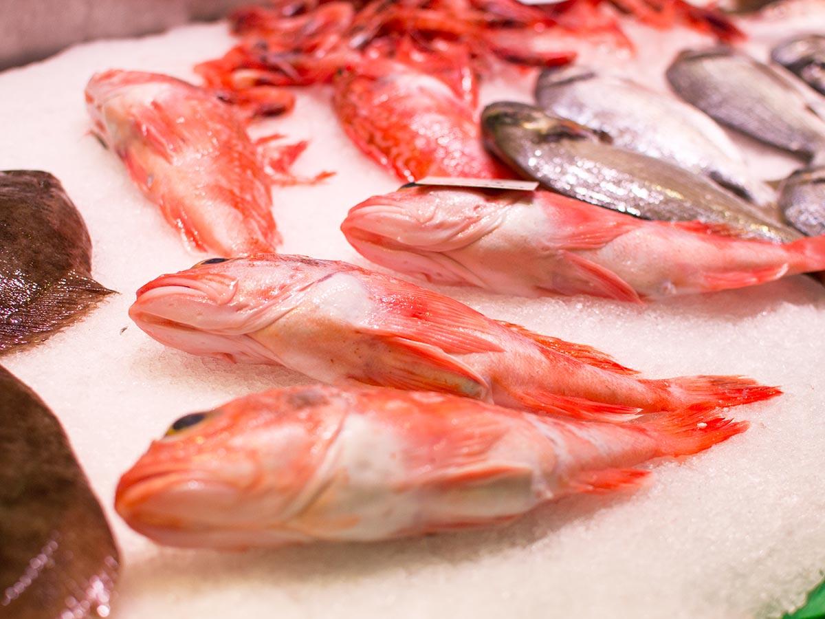 peixos-serra-04